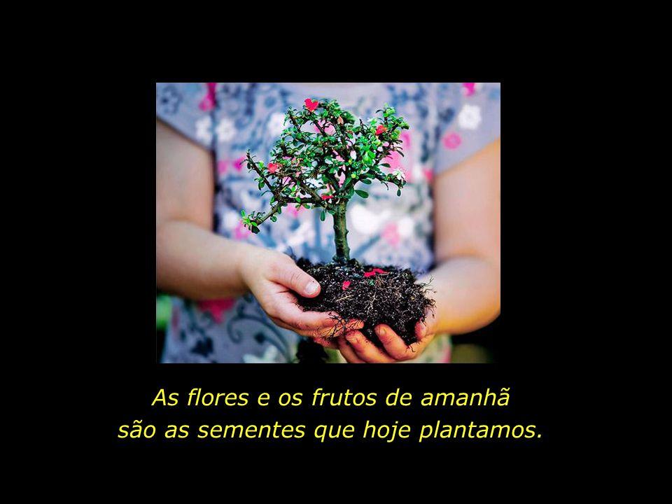 Os canteiros do espírito, os jardins de uma alma...