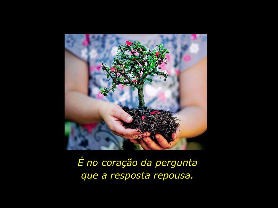 As flores e os frutos de amanhã são as sementes que hoje plantamos.