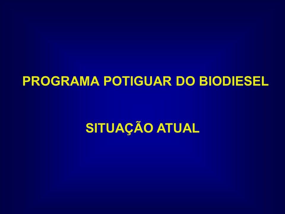 PROGRAMA POTIGUAR DO BIODIESEL SITUAÇÃO ATUAL