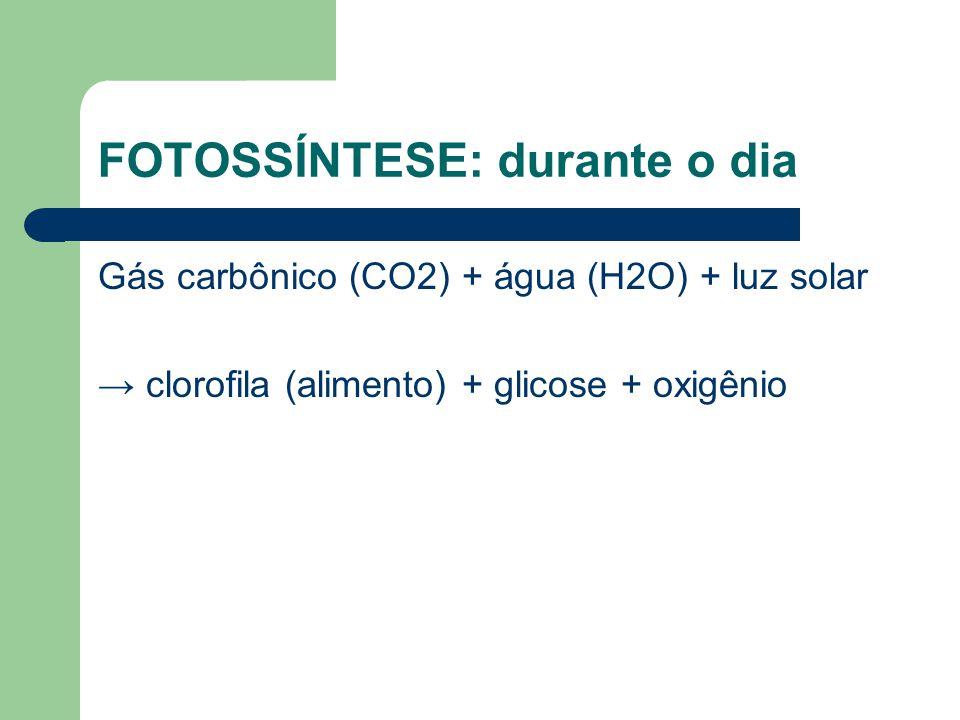 FOTOSSÍNTESE: durante o dia Gás carbônico (CO2) + água (H2O) + luz solar → clorofila (alimento) + glicose + oxigênio