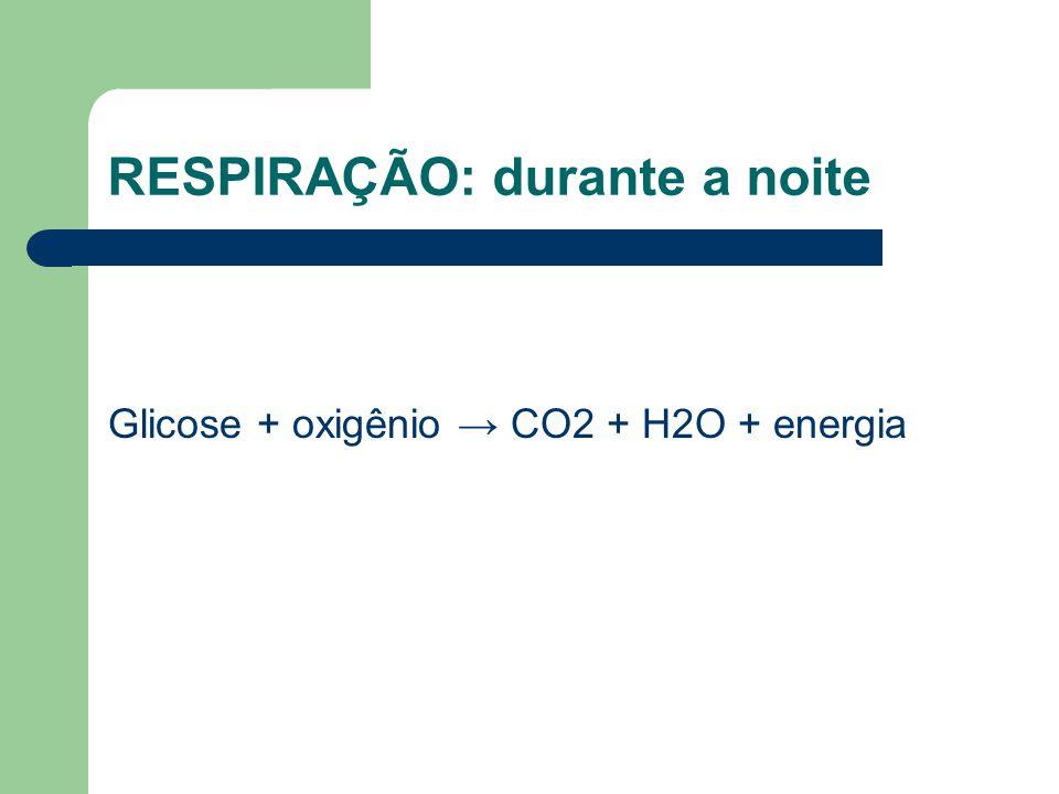 RESPIRAÇÃO: durante a noite Glicose + oxigênio → CO2 + H2O + energia