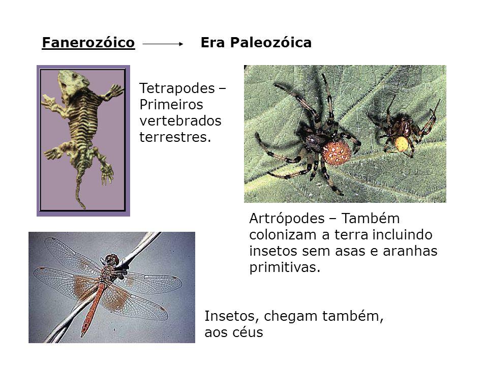 Era PaleozóicaFanerozóico Tetrapodes – Primeiros vertebrados terrestres. Artrópodes – Também colonizam a terra incluindo insetos sem asas e aranhas pr