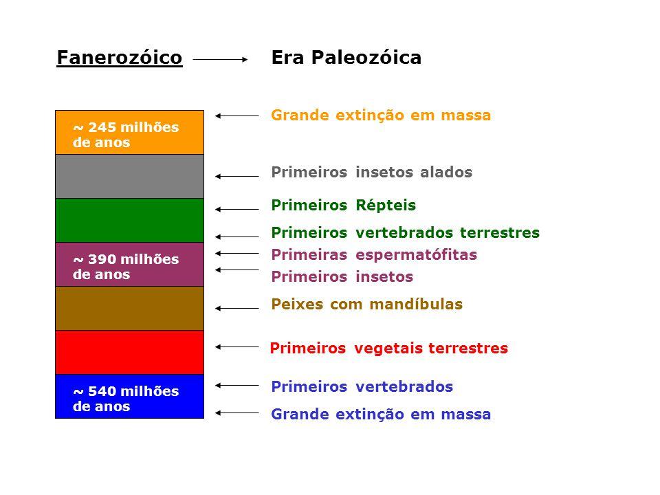 Era PaleozóicaFanerozóico ~ 540 milhões de anos ~ 245 milhões de anos ~ 390 milhões de anos Grande extinção em massa Primeiros Répteis Primeiros verte