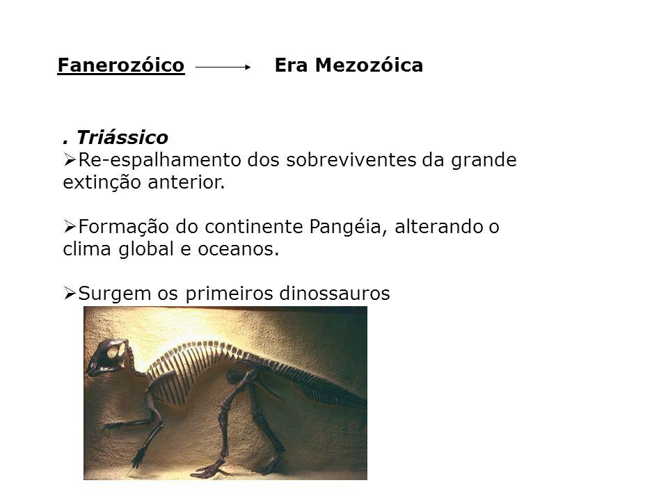 Era MezozóicaFanerozóico. Triássico  Re-espalhamento dos sobreviventes da grande extinção anterior.  Formação do continente Pangéia, alterando o cli