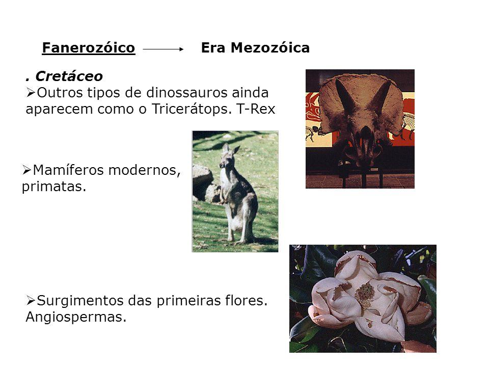 Era MezozóicaFanerozóico. Cretáceo  Outros tipos de dinossauros ainda aparecem como o Tricerátops. T-Rex  Mamíferos modernos, primatas.  Surgimento
