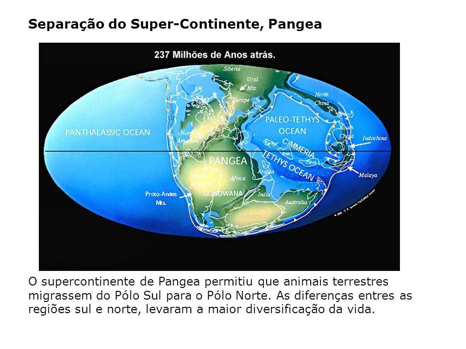 O supercontinente de Pangea permitiu que animais terrestres migrassem do Pólo Sul para o Pólo Norte. As diferenças entres as regiões sul e norte, leva