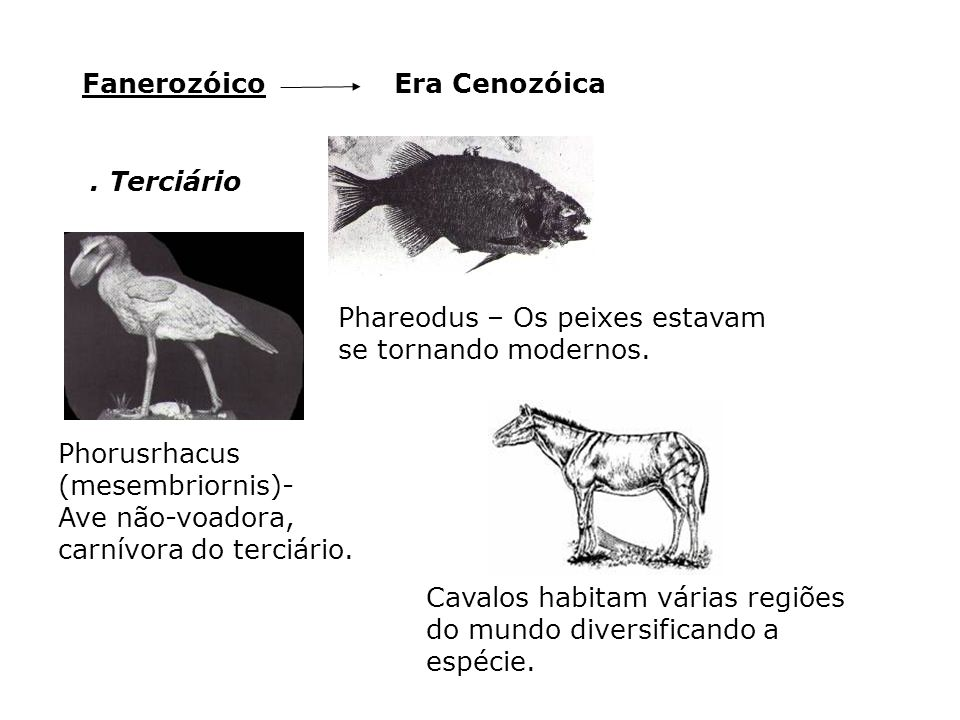 Era CenozóicaFanerozóico. Terciário Phorusrhacus (mesembriornis)- Ave não-voadora, carnívora do terciário. Phareodus – Os peixes estavam se tornando m