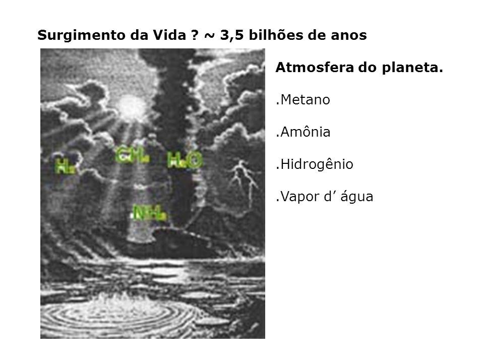 Atmosfera inicial chuva Moléculas orgânicas simples, aminoácidos Radiação e descargas mar Água, sais e moléculas orgânicas simples Água, sais e moléculas orgânicas simples e complexas COACERVADOS CÉLULAS PRIMITIVAS (heterotróficas aeróbias) PROTOGENES