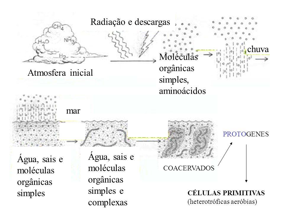 Atmosfera inicial chuva Moléculas orgânicas simples, aminoácidos Radiação e descargas mar Água, sais e moléculas orgânicas simples Água, sais e molécu
