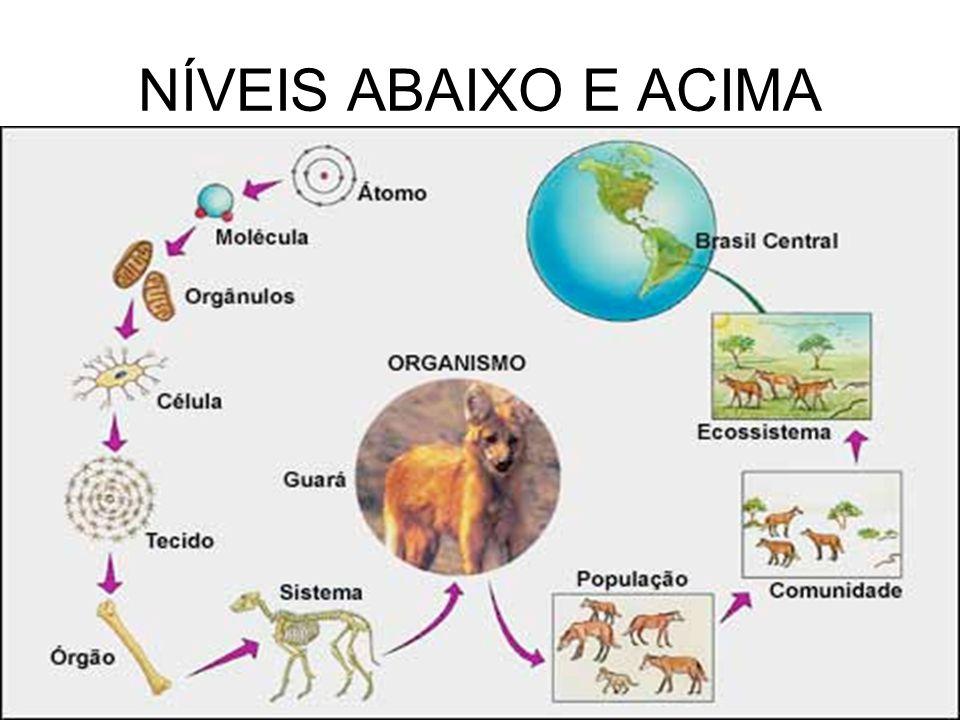 NÍVEIS ABAIXO E ACIMA