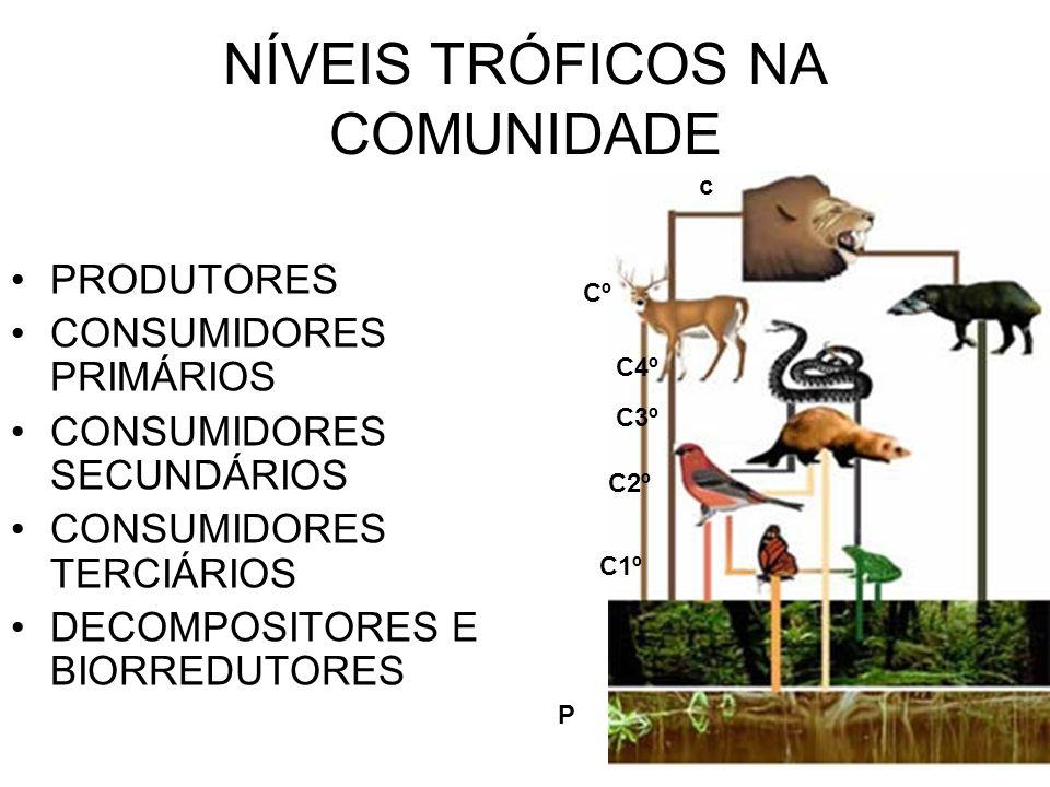 NÍVEIS TRÓFICOS NA COMUNIDADE PRODUTORES CONSUMIDORES PRIMÁRIOS CONSUMIDORES SECUNDÁRIOS CONSUMIDORES TERCIÁRIOS DECOMPOSITORES E BIORREDUTORES P C1º