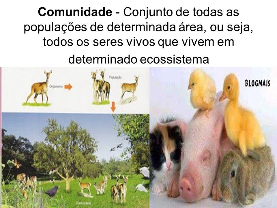 Comunidade - Conjunto de todas as populações de determinada área, ou seja, todos os seres vivos que vivem em determinado ecossistema