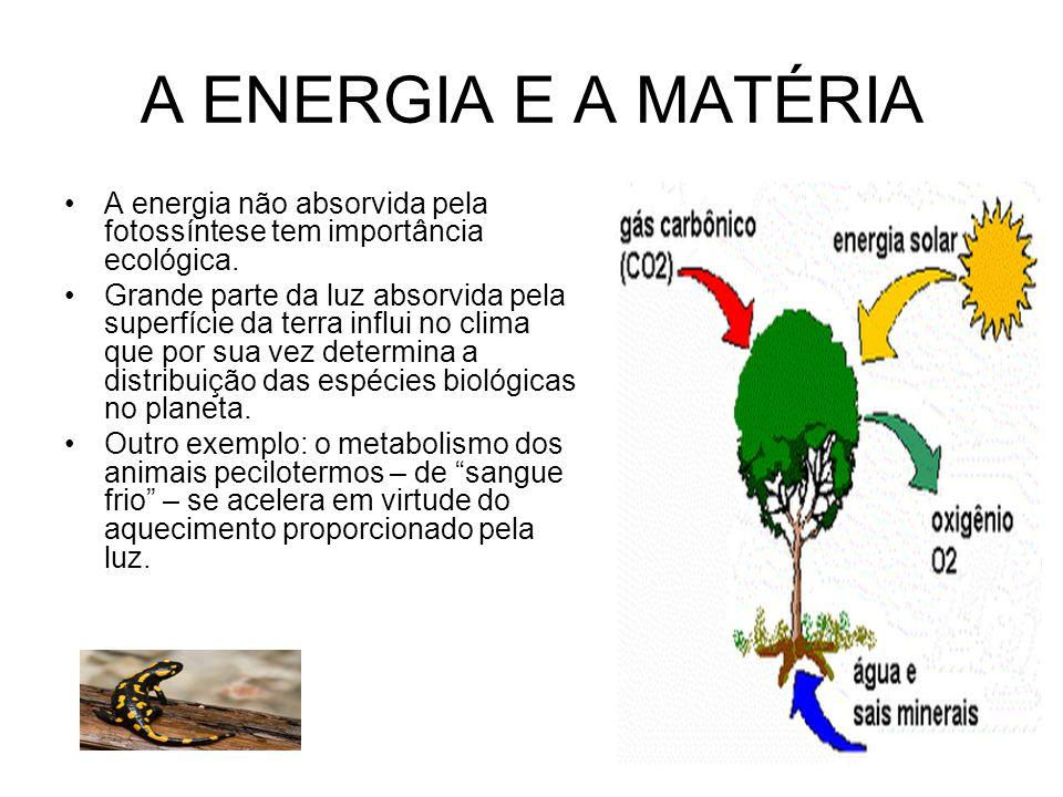 A ENERGIA E A MATÉRIA A energia não absorvida pela fotossíntese tem importância ecológica. Grande parte da luz absorvida pela superfície da terra infl
