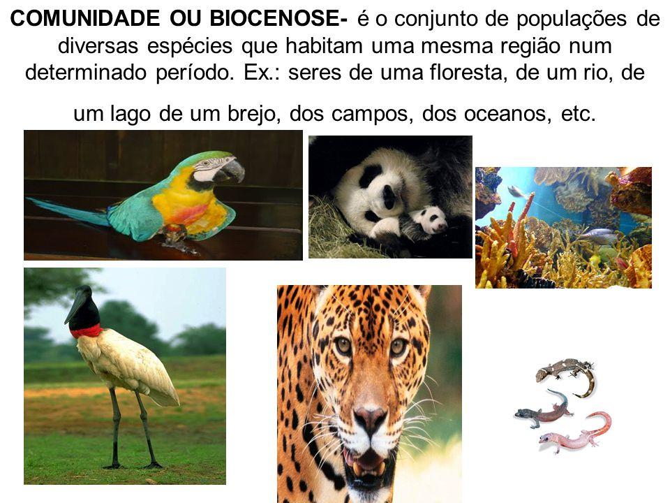 COMUNIDADE OU BIOCENOSE- é o conjunto de populações de diversas espécies que habitam uma mesma região num determinado período. Ex.: seres de uma flore