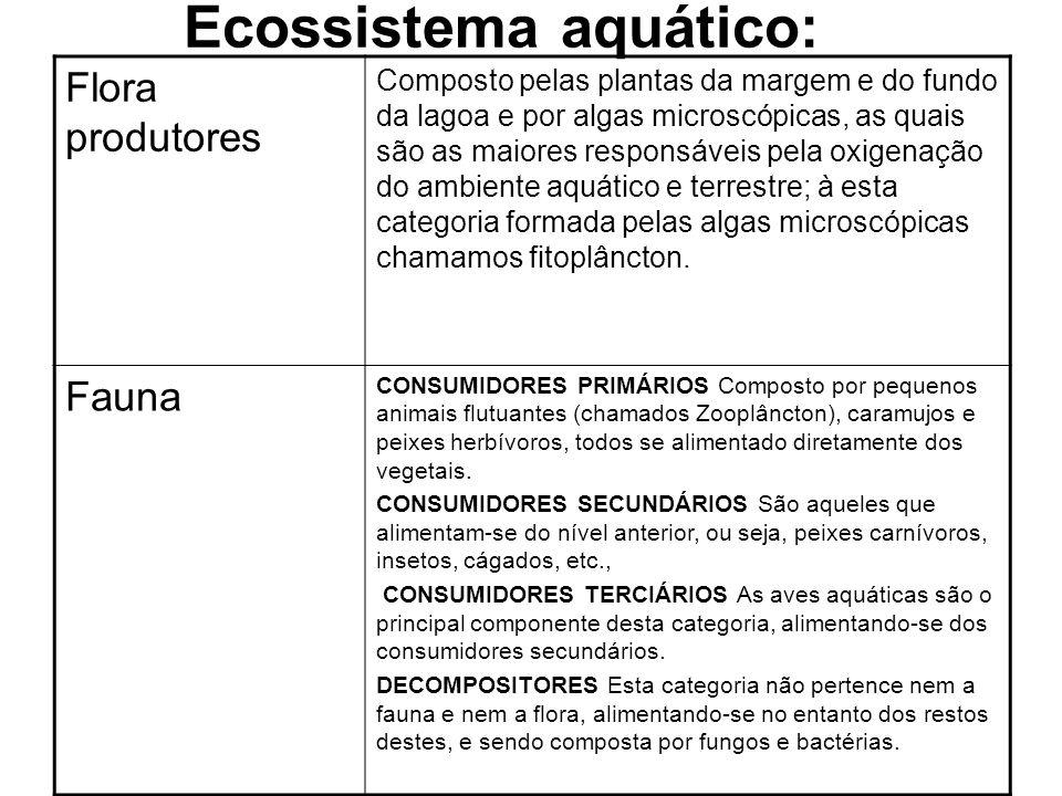 Ecossistema aquático: Flora produtores Composto pelas plantas da margem e do fundo da lagoa e por algas microscópicas, as quais são as maiores respons