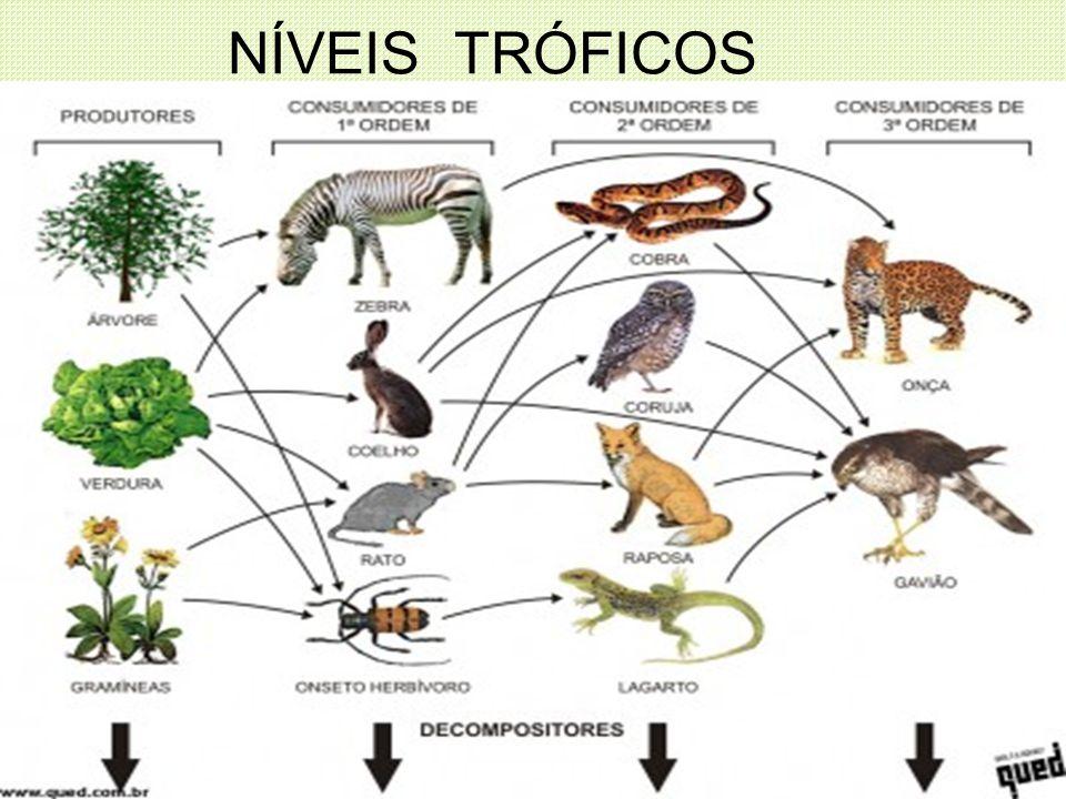 NÍVEIS TRÓFICOS