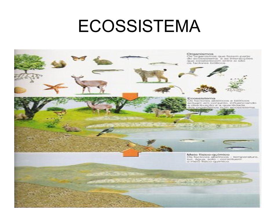 HABITAT HABITAT- é o lugar específico onde uma espécie pode ser encontrada, isto é, o seu ENDEREÇO dentro do ecossistema.