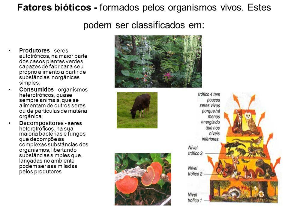 Fatores bióticos - formados pelos organismos vivos. Estes podem ser classificados em: Produtores - seres autotróficos, na maior parte dos casos planta
