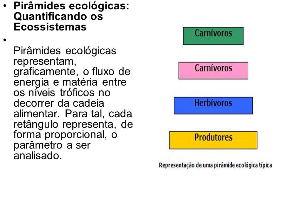 Pirâmides ecológicas: Quantificando os Ecossistemas Pirâmides ecológicas representam, graficamente, o fluxo de energia e matéria entre os níveis trófi