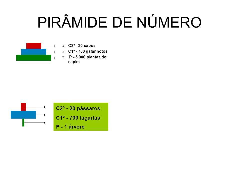 PIRÂMIDE DE NÚMERO »C2º - 30 sapos »C1º - 700 gafanhotos » P - 5.000 plantas de capim C2º - 20 pássaros C1º - 700 lagartas P - 1 árvore