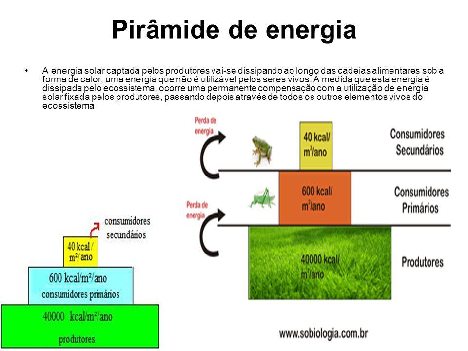 Pirâmide de energia A energia solar captada pelos produtores vai-se dissipando ao longo das cadeias alimentares sob a forma de calor, uma energia que