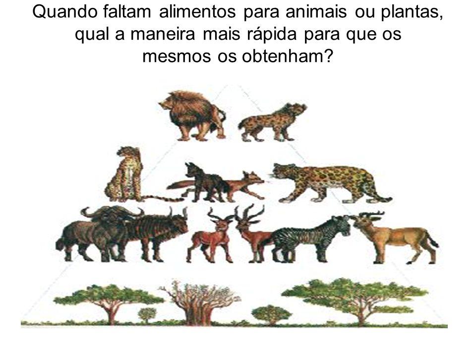 Quando faltam alimentos para animais ou plantas, qual a maneira mais rápida para que os mesmos os obtenham?