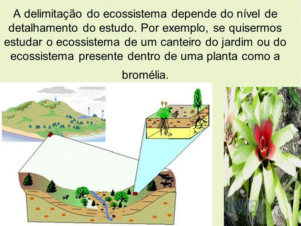 A delimitação do ecossistema depende do nível de detalhamento do estudo. Por exemplo, se quisermos estudar o ecossistema de um canteiro do jardim ou d