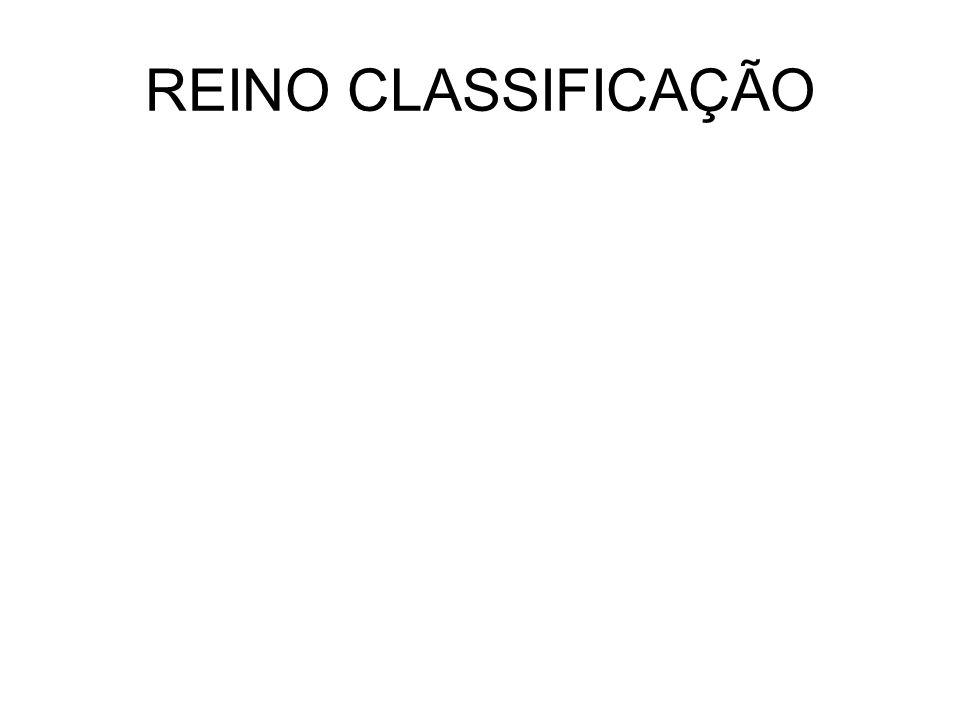 REINO CLASSIFICAÇÃO