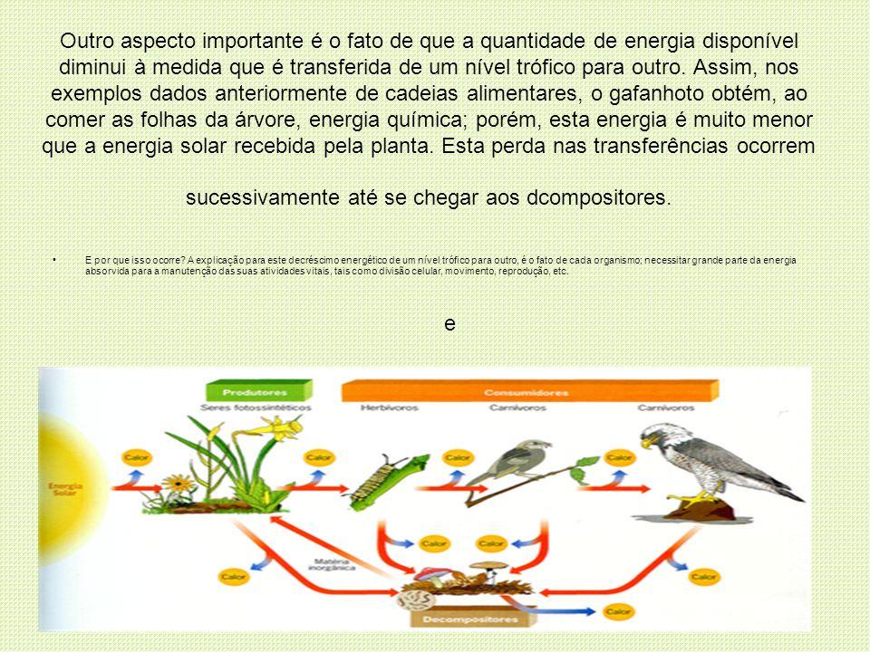 Outro aspecto importante é o fato de que a quantidade de energia disponível diminui à medida que é transferida de um nível trófico para outro. Assim,
