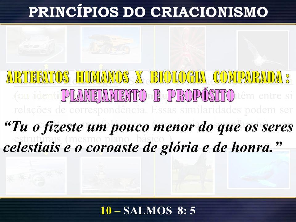 10 – SALMOS 8: 5 PRINCÍPIOS DO CRIACIONISMO