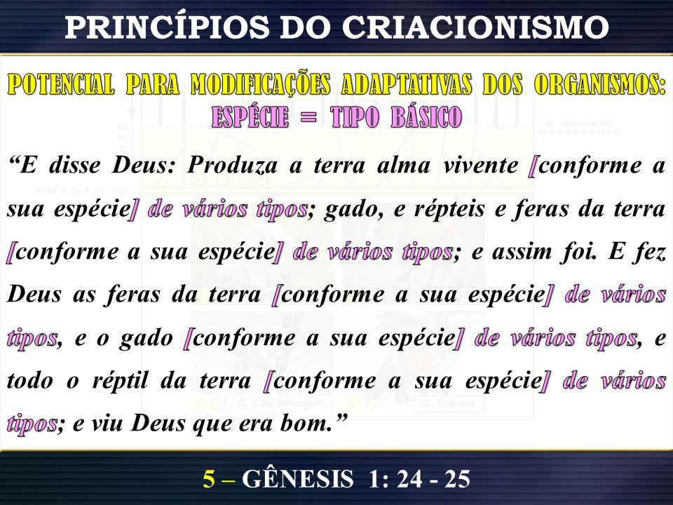 5 – GÊNESIS 1: 24 - 25 PRINCÍPIOS DO CRIACIONISMO T i p o sB á s i c o s CdLRCs Cd G. Cão doméstico R G. Raposa Fam.Can. Cs G. Cão Selvagem L G. Lobo