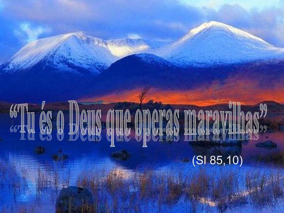 Tributai ao Senhor, ó filhos de Deus Tributai ao Senhor, glória e poder . Salmo 28,1