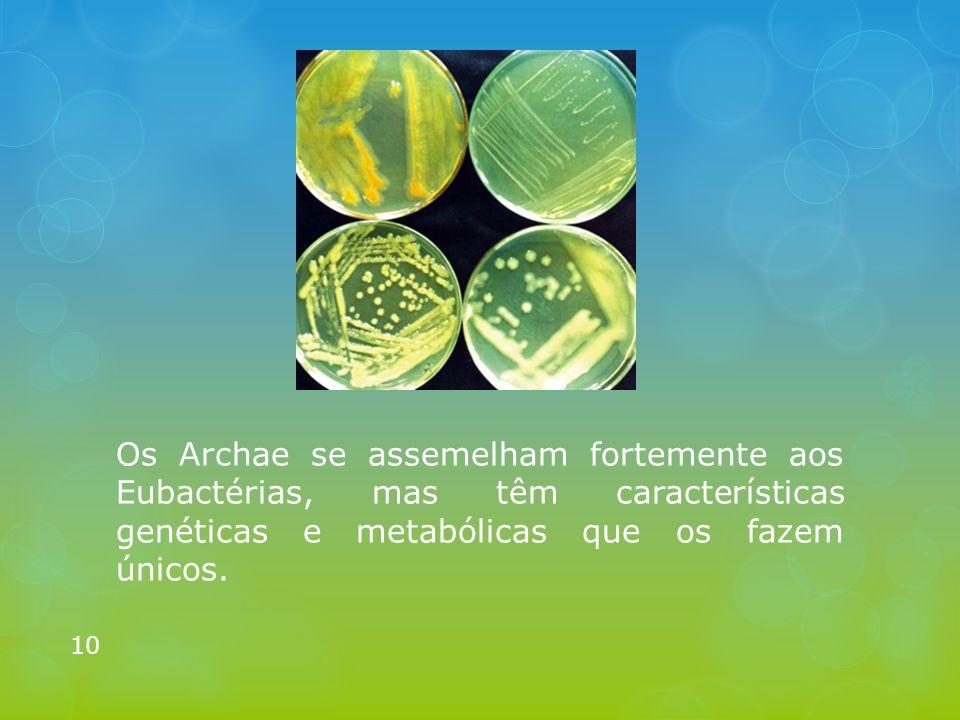 Os Archae se assemelham fortemente aos Eubactérias, mas têm características genéticas e metabólicas que os fazem únicos. 10