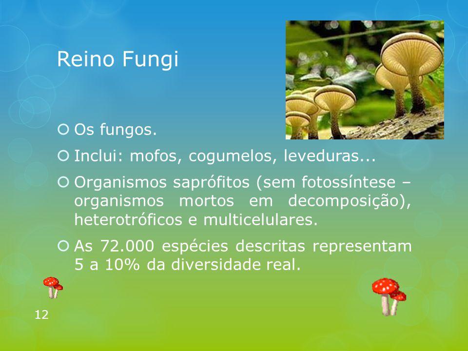 Reino Fungi  Os fungos.  Inclui: mofos, cogumelos, leveduras...  Organismos saprófitos (sem fotossíntese – organismos mortos em decomposição), hete