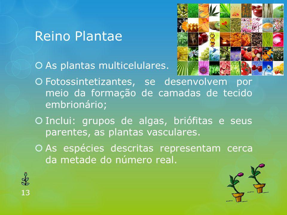 Reino Plantae  As plantas multicelulares.  Fotossintetizantes, se desenvolvem por meio da formação de camadas de tecido embrionário;  Inclui: grupo