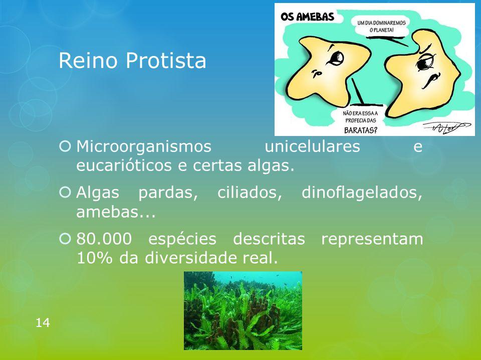 Reino Protista  Microorganismos unicelulares e eucarióticos e certas algas.  Algas pardas, ciliados, dinoflagelados, amebas...  80.000 espécies des