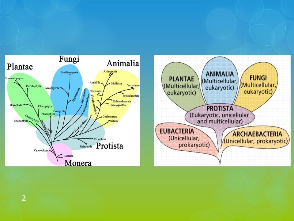 Árvores evolutivas Uma das primeiras árvores evolutivas da vida feita a partir de uma perspectiva darwiniana (genealógica) foi publicada por Ernst Haeckel em 1866.