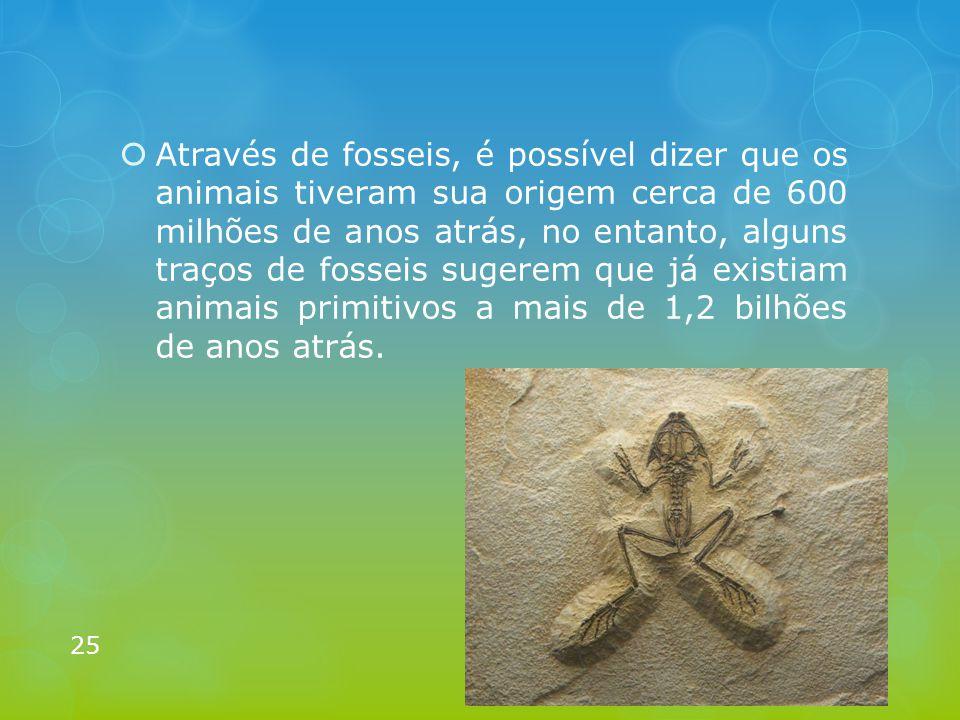  Através de fosseis, é possível dizer que os animais tiveram sua origem cerca de 600 milhões de anos atrás, no entanto, alguns traços de fosseis suge