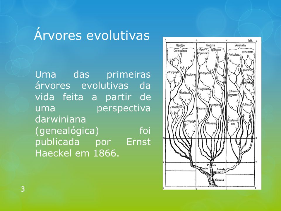 Árvores evolutivas Uma das primeiras árvores evolutivas da vida feita a partir de uma perspectiva darwiniana (genealógica) foi publicada por Ernst Hae