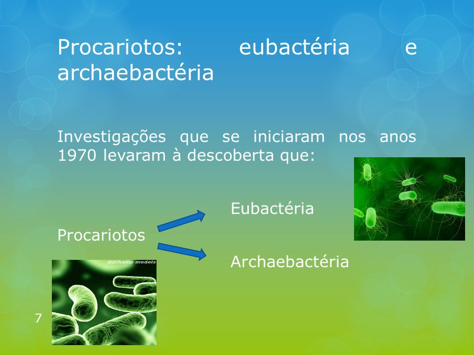 Procariotos: eubactéria e archaebactéria Investigações que se iniciaram nos anos 1970 levaram à descoberta que: Eubactéria Procariotos Archaebactéria