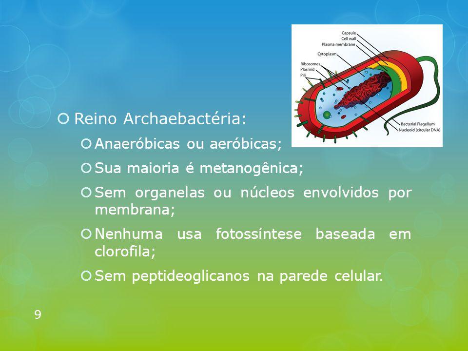  Reino Archaebactéria:  Anaeróbicas ou aeróbicas;  Sua maioria é metanogênica;  Sem organelas ou núcleos envolvidos por membrana;  Nenhuma usa fo