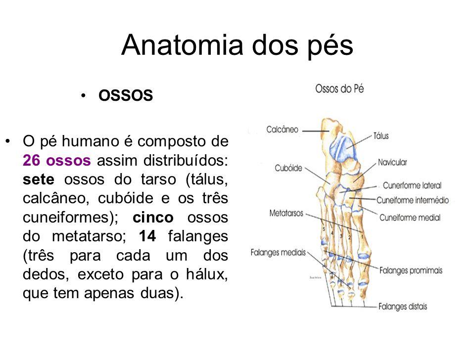 Anatomia dos pés OSSOS O pé humano é composto de 26 ossos assim distribuídos: sete ossos do tarso (tálus, calcâneo, cubóide e os três cuneiformes); ci