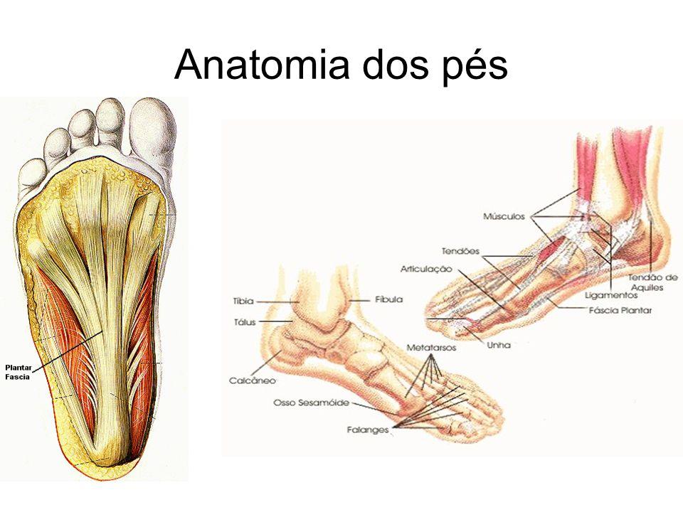 CIRCULAÇÃO O sangue que irriga os pés percorre uma longa rota arterial.