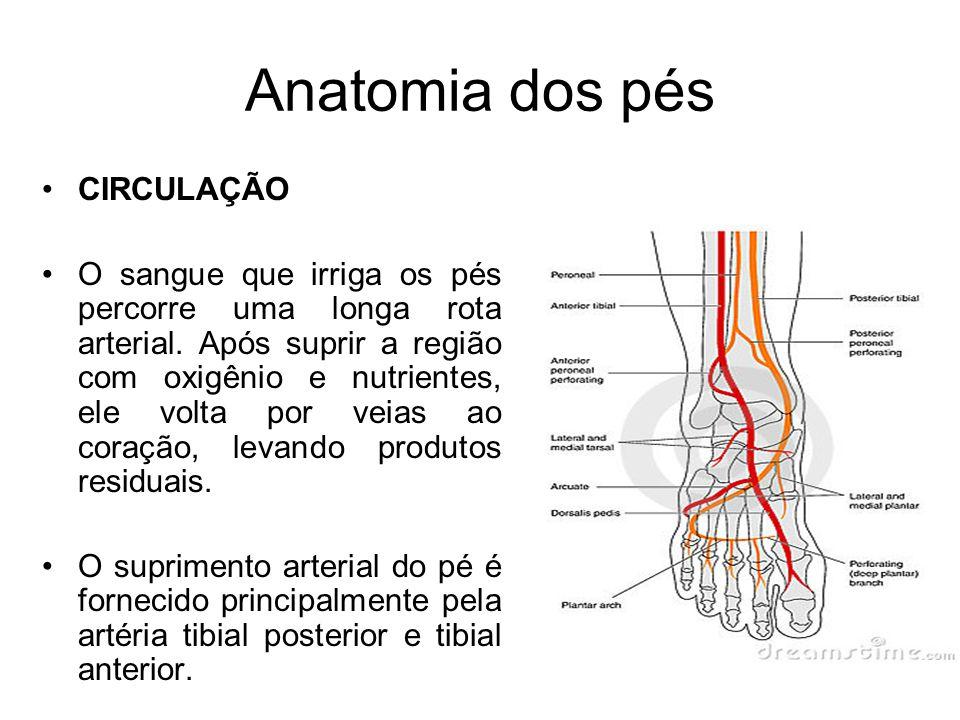 CIRCULAÇÃO O sangue que irriga os pés percorre uma longa rota arterial. Após suprir a região com oxigênio e nutrientes, ele volta por veias ao coração