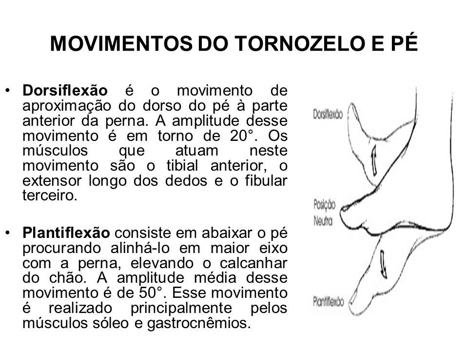 MOVIMENTOS DO TORNOZELO E PÉ Dorsiflexão é o movimento de aproximação do dorso do pé à parte anterior da perna. A amplitude desse movimento é em torno