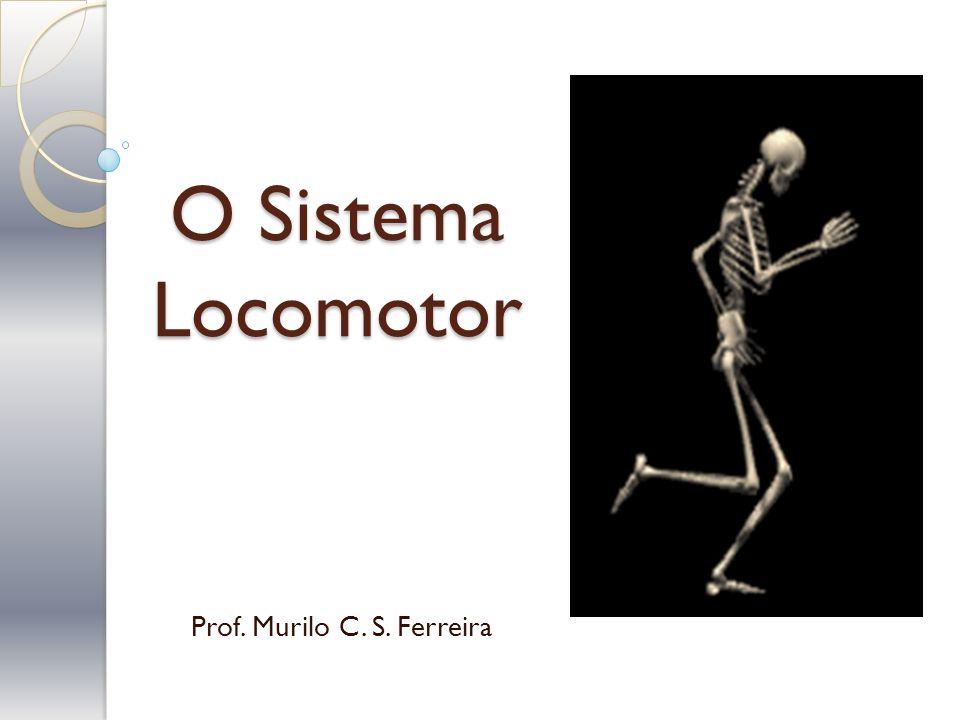 O Sistema Locomotor Prof. Murilo C. S. Ferreira
