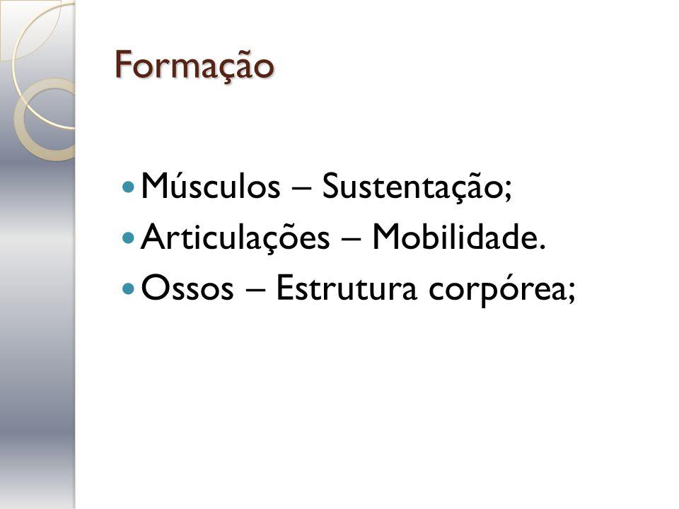 Formação Músculos – Sustentação; Articulações – Mobilidade. Ossos – Estrutura corpórea;