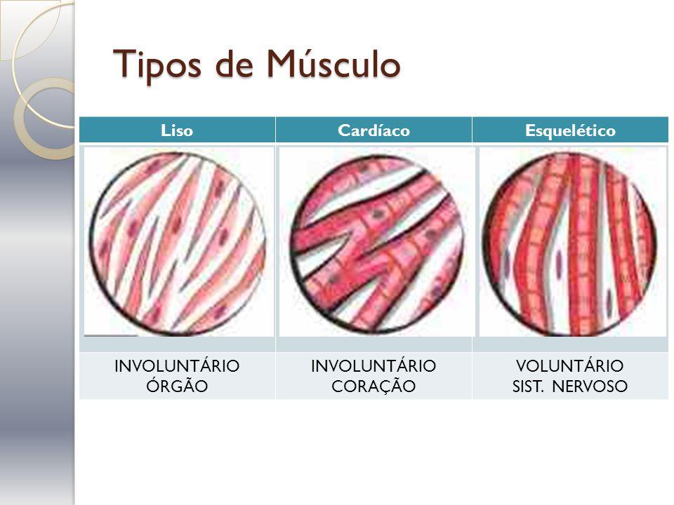 Tipos de Músculo LisoCardíacoEsquelético INVOLUNTÁRIO ÓRGÃO INVOLUNTÁRIO CORAÇÃO VOLUNTÁRIO SIST. NERVOSO