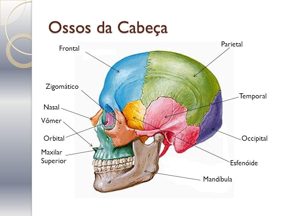 Ossos da Cabeça Parietal Frontal Occipital Temporal Zigomático Mandíbula Nasal Esfenóide Maxilar Superior Vômer Orbital