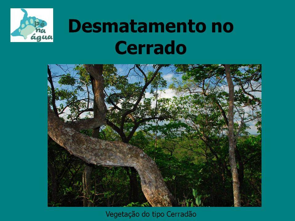 Desmatamento no Cerrado Vegetação do tipo Cerradão